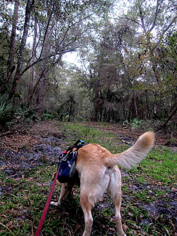 Lower Hillsborough Wilderness Preserve Tampa